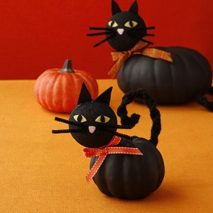 pumpkin-cats-x